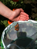 Learning about nature by watching caterpillars turn into beautiful butterflies